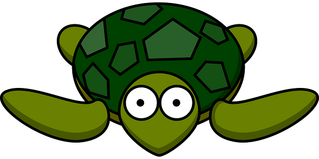 turtle-297662_640